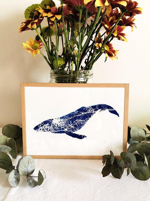 Baleine Cyanotypé Nigelle