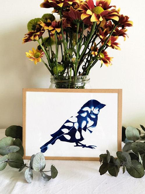 Oiseau Cyanotypé Acacia