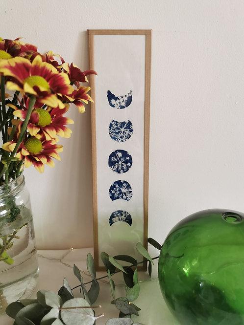 Cyanotype encadré croissants de Lune fleurs de Carotte
