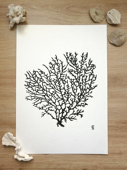 Impression Corail