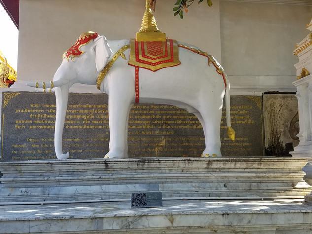 White Elephant at Doi Suthep