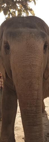Elephant Park day