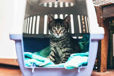 striped-kitten-in-travel-crate.jpg