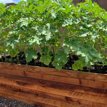 2-Foot Garden Box