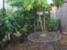 Backyard food forest
