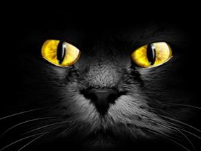 The Black Cat on Bleecher Street: Halloween Fiction