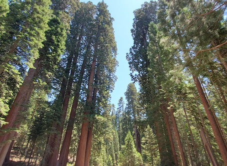 California Photo Adventure: Visiting Kings/Sequoia National Park