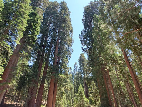 California Photo Adventure: Visiting Kings/Sequoia National Park