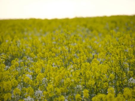 California Super Bloom 2021
