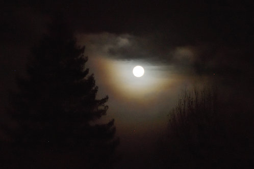 Wolf Moon Over Oakland