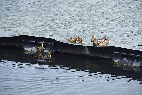 Family Divided By Lake Merritt