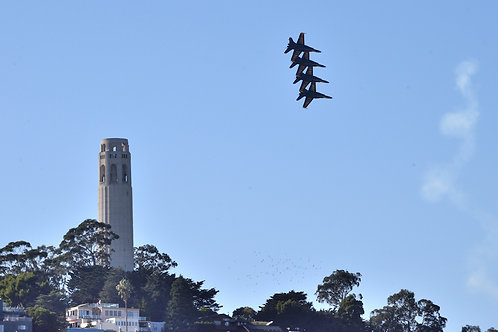 Coit Tower Buzz