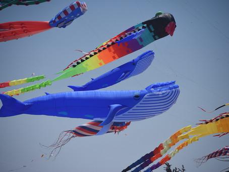 Kites Above Berkeley!!!