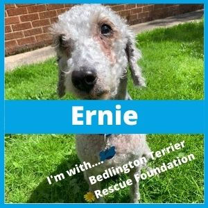 Rescue_BTRF_Ernie1.jpg