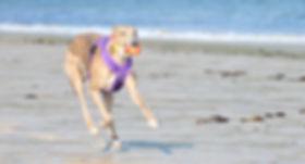 Lisa's dog Daylah Doodlebug