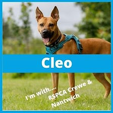 Rescue_RSPCA_Cleo1.jpg