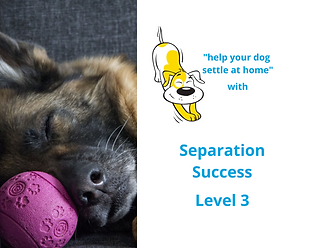 Online Course Separation Success in Dogs Level 3