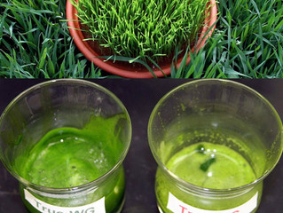 Not All Wheat Grass Is Created Equal