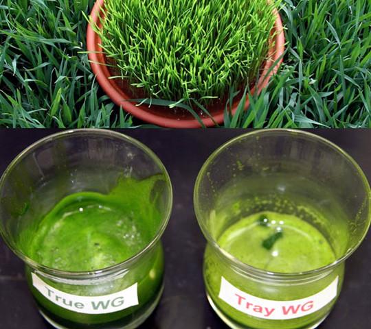 field grow vs tray wheat grass- bio2go