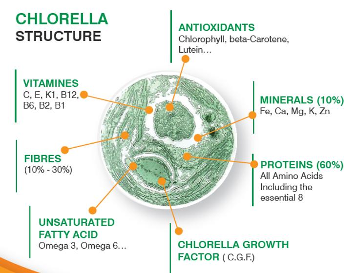 Bio2go™ Chlorella Structure