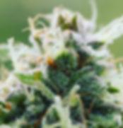 FlowerImage.jpg