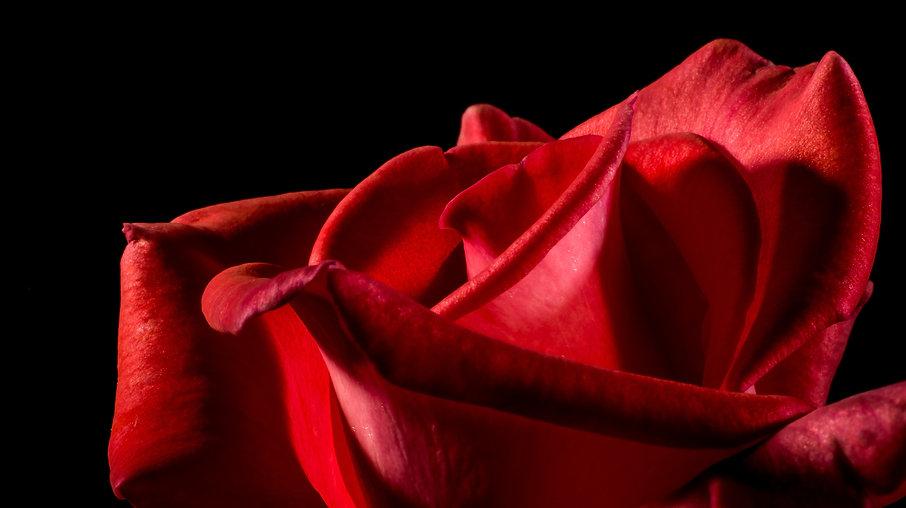 red-rose-320892.jpg