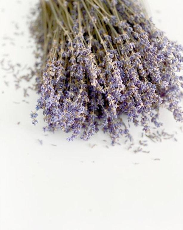 Lavender buds.jpg
