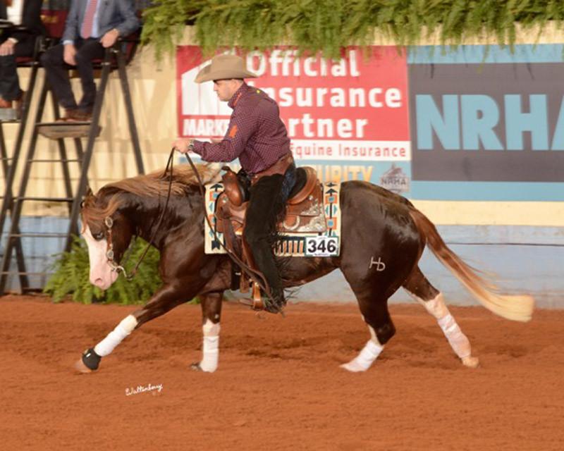 inferno-sixty-six-breeding-stallion-circ
