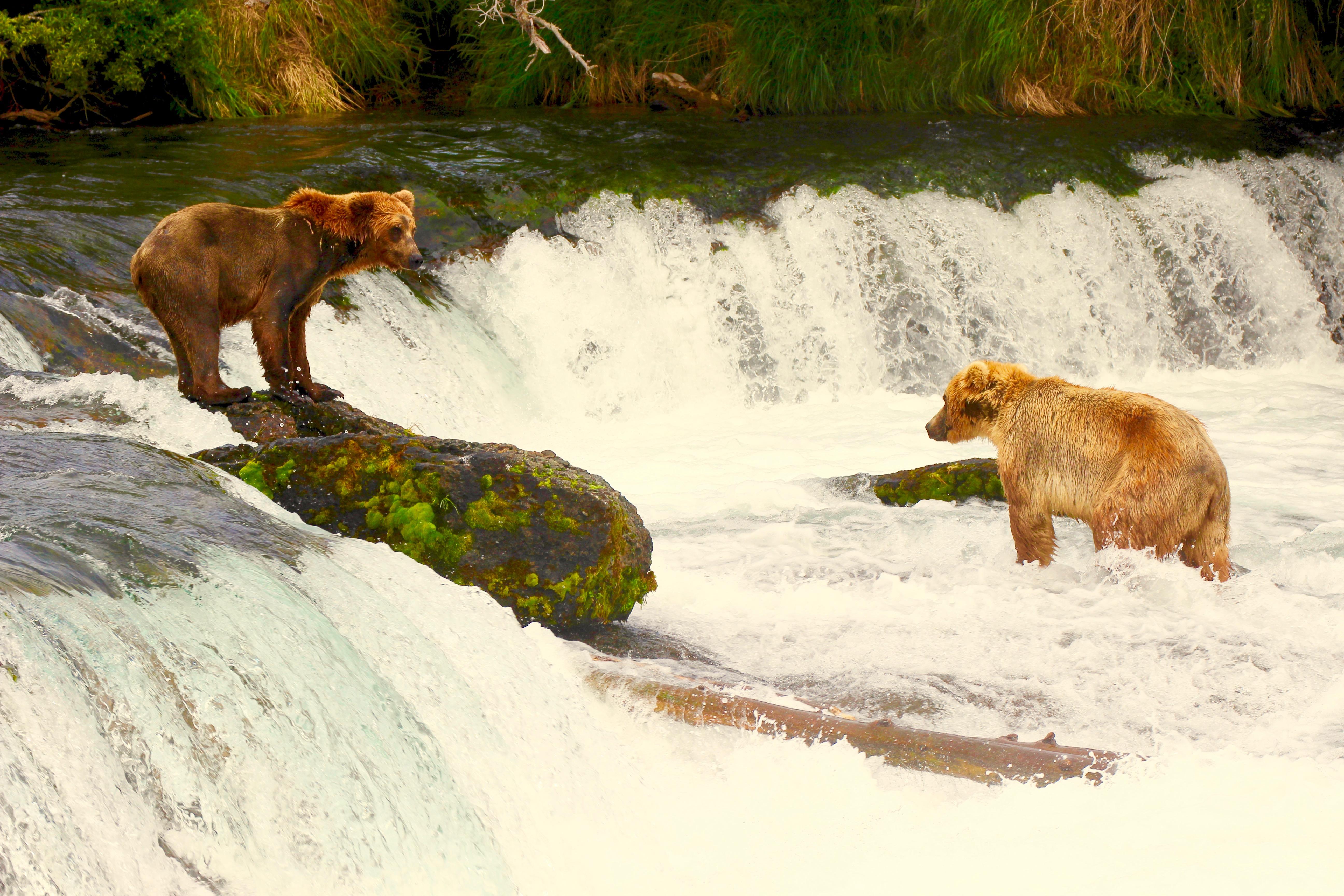Bear #10