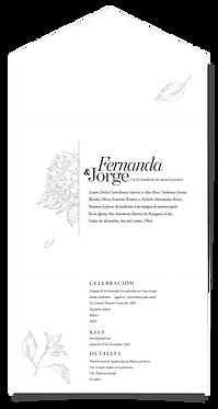 FERNANDA (50sets)