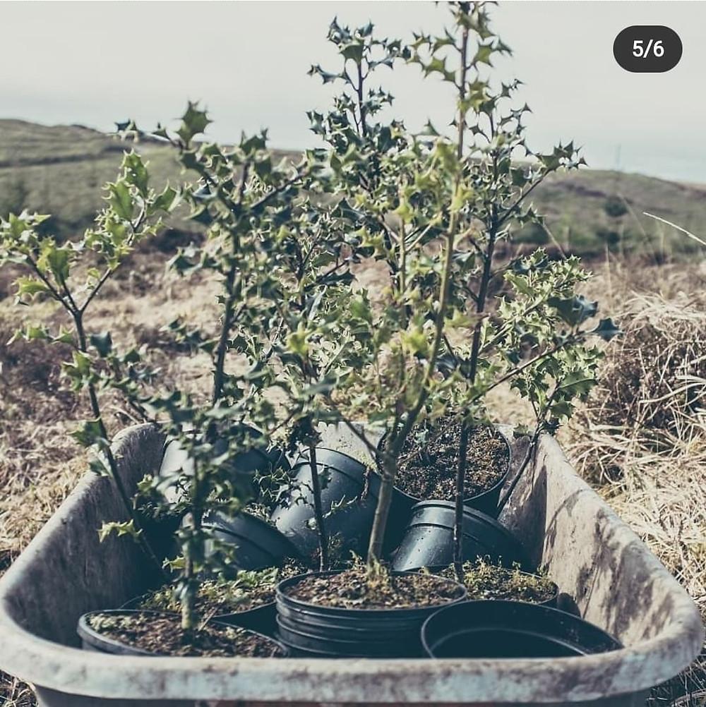 Reforestation Ireland