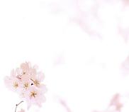 back_sakura.png