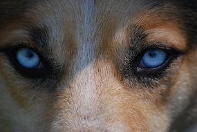 eyes-712125_1920.jpg