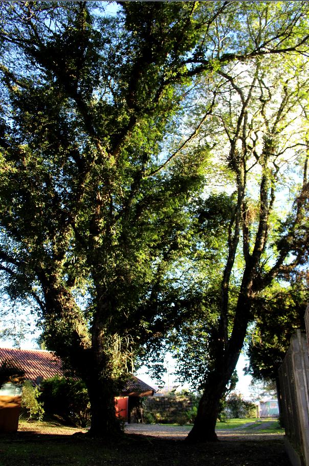 Entrada do Bosque