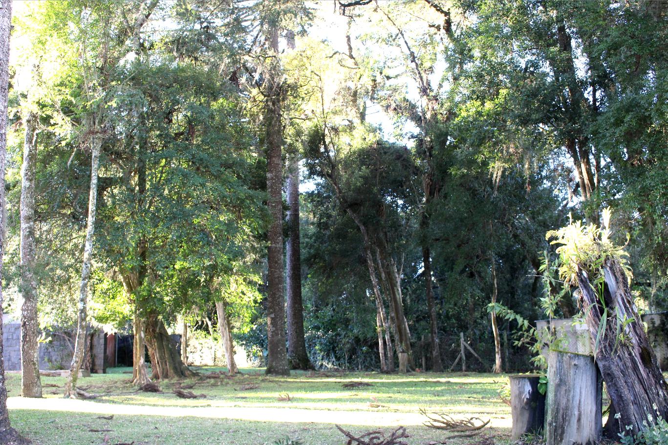Bosque, treinos ao ar livre.