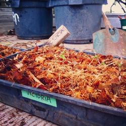 New Victoria rhizomes
