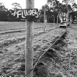 Big hopes for Flinders!