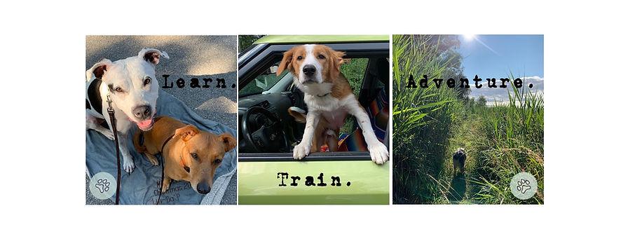 Full Circle Dog Training Banner.jpg