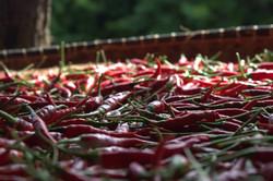 piments séchés (1)