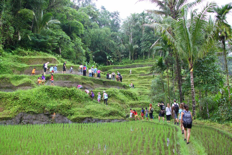 nettoyage rizieres