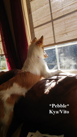 pebble10