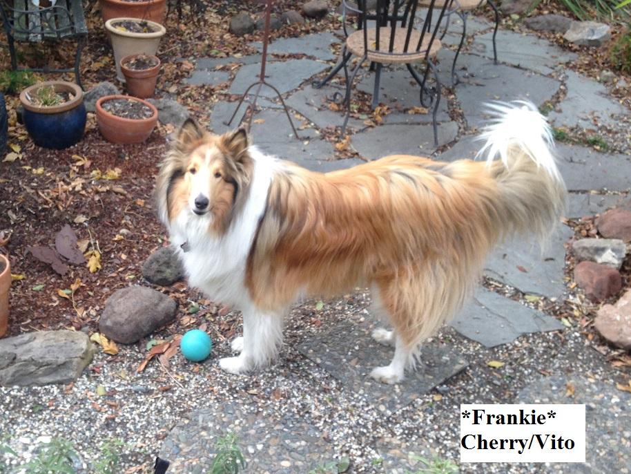 Frankie Ball