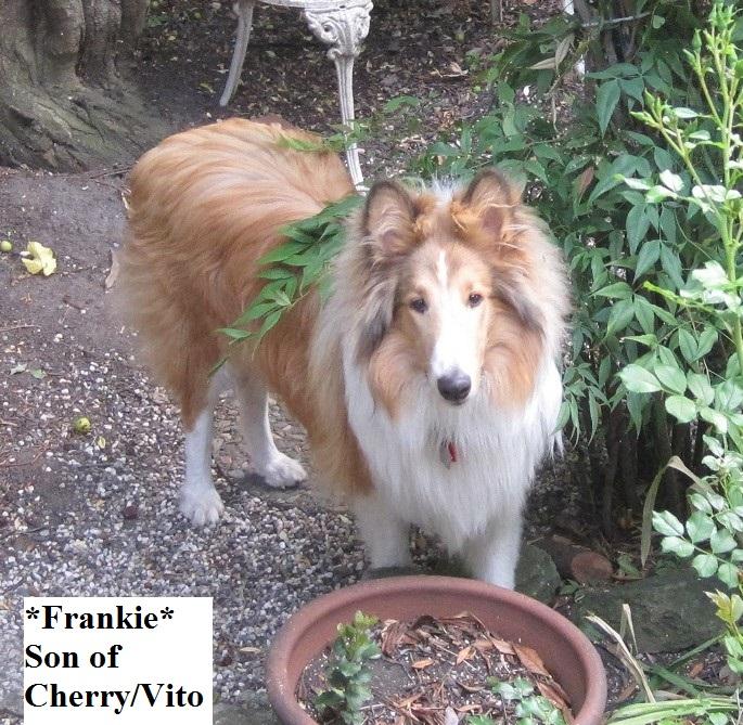Frankie 2014-11-07 01.14