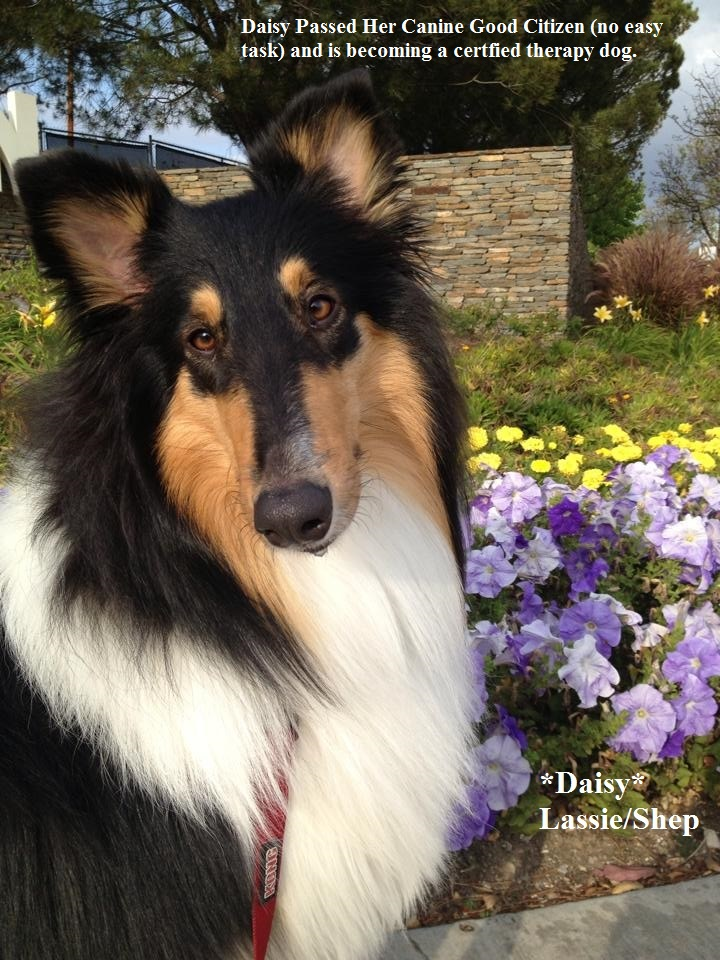 Daisy 2015