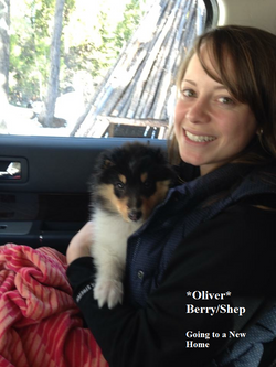 Oliver 8