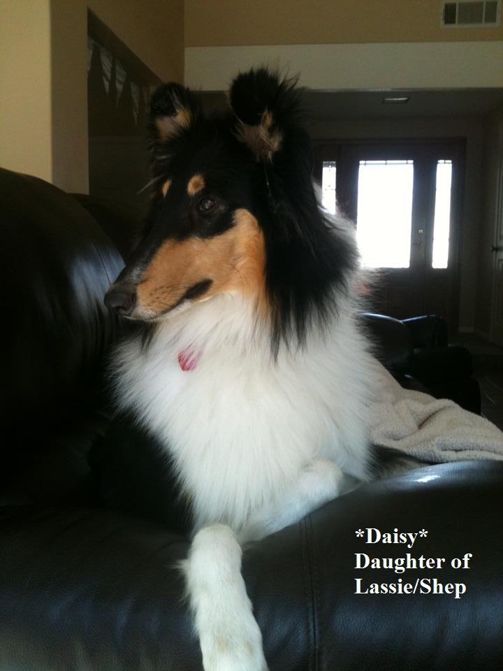 Daisy 9 months