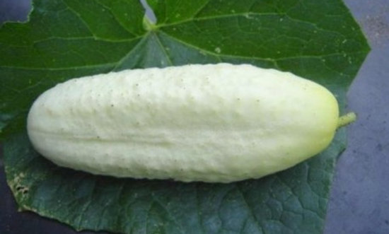 Concombre Sel et Poivre