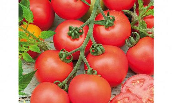 Tomate Campari