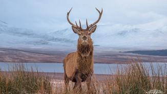 The Highland Explorer Tour