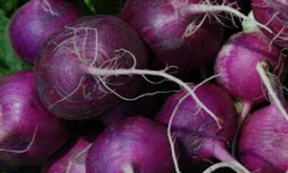 Radis Plum Purple